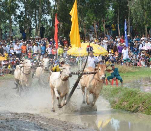 Vietnam Festival Tours